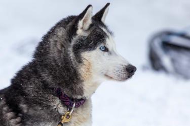 Dog Sledding discovery