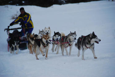 Dog sled driving initiation