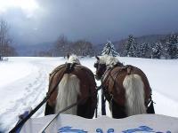 Polish sled Annecy