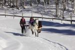 Ski Joering Seminar