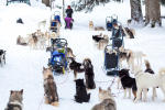 Sled dog Snow Seminars Annecy