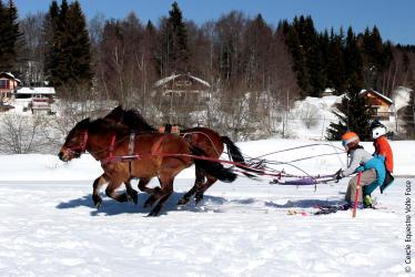 Ski Joëring - Demi-Journée