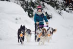 Séminaire hiver à Annecy : Chien de traineau