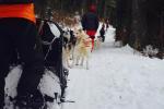 Séminaire neige près d'Annecy - Chien de traineau