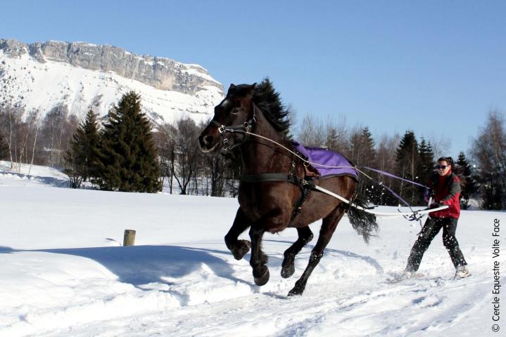 Ski Joering & Sleigh